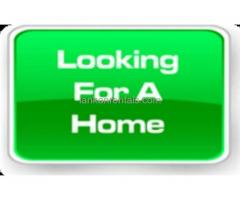 Wanted 3 Bedrooms House